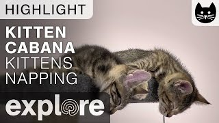 Two Kittens Napping and Almost Fall!! - Live Camera Highlight