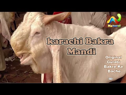 Lalokhet Bakra Mandi  ||  Cow Mandi || Karachi Bakra Mandi 10 Sep 2017 URDU/HINDI