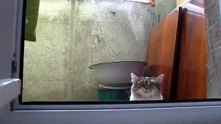 Кот нкассал в тапки и спрятался на балконе