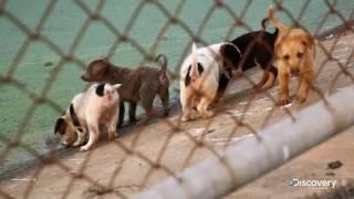 Уличные собаки - Жизнь собак