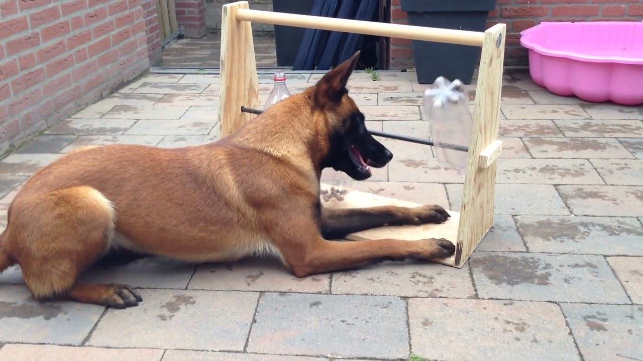 Recopilación de perros inteligentes