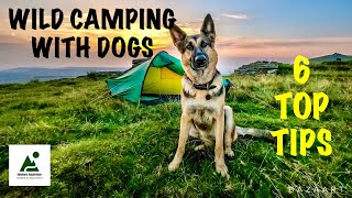 Wild Camping With Dogs, 6 T๐p Tips