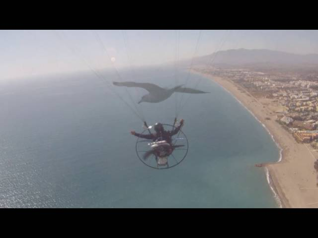 PXP Paramotor - Bring out the bird in you