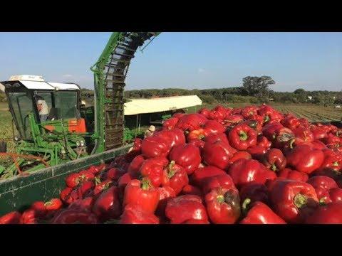 Удивительная сельхозтехника в работе