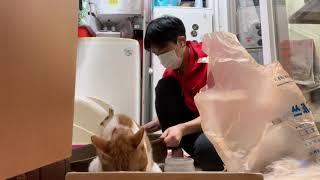 고양이 응가 치우기 145일차 수요일 (자본수익률이 높…