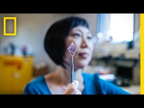 Xiaolin Zheng: Solar Stickers to Power the World | Nat Geo Live