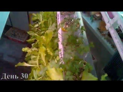 Салат за 40 дней