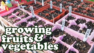 Growing Fruits And Vegetables - Green Vegetable Seeds Garden Planner - Container Gardening - Jazevox