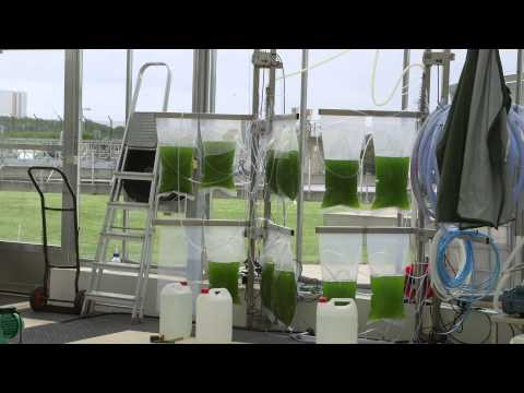 Kalundborg E4Water: Using microalgae to convert industrial wastewater into high value byproducts