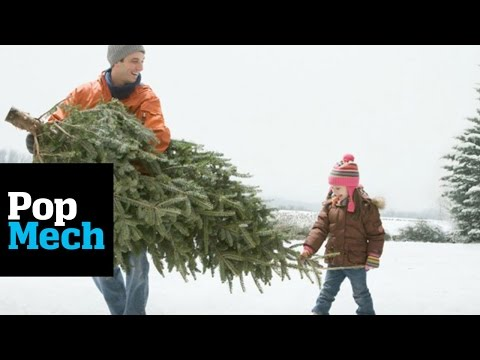 5 Rules for Keeping Your Christmas Tree Fresh | PopMech