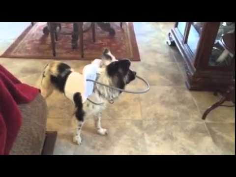 Facebook Muffin's Halo For Blind Dogs  Facebook