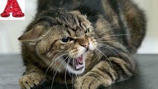 Бешеная кошка нападает на людей! Ужас.