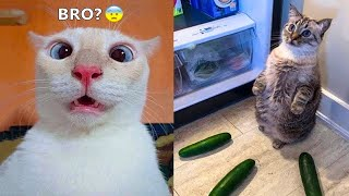 Funniest Animals - Best Of The 2021 Funny Animal Videos #59