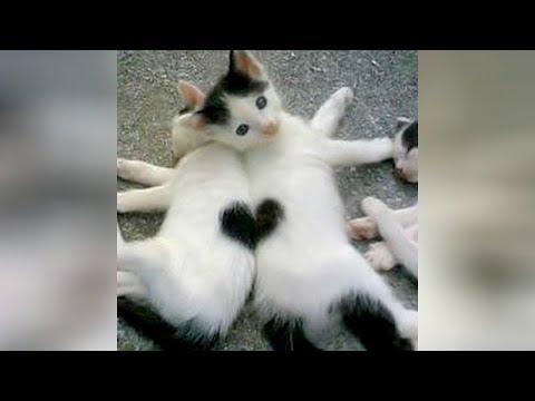 Super CUTE & FUNNY ANIMALS - Get ready to LAUGH REALLY HARD!