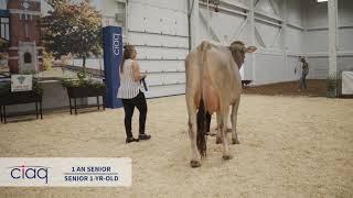 SUISSE BRUNE SUPRÊME LAITIER 2019 1 an senior  en lait
