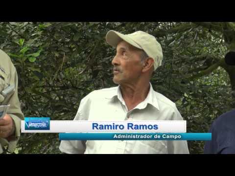 Inversion y Desarrollo con Luis Velasquez 343. Guatemala Producción de Nuez de Macadamia