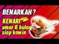 Kenari Betina Umur  Bulan Siap Dikawinkan Benarkah  Mp3 - Mp4 Download