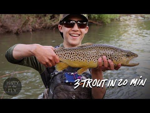 Fly Fishing Film | 3 Trout In 20 Min | Bald Eagle Creek, Pennsylvania