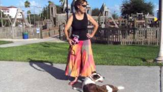 Off Leash Dog Training Aussie X Boxer Mix Dogtra E Collar