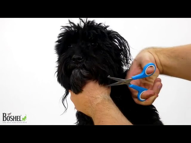 Product Video - BOSHEL Dog Grooming Scissors Set⠀