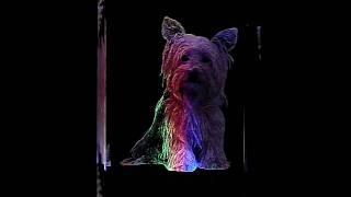 Yorkshire Terrier S1 2d Laser Etched Portrait Crystal