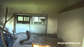 Кормление змеи в музее Найроби (Feeding a snake in the National museum of Nairobi)