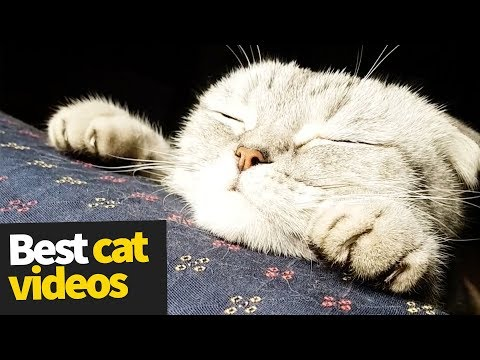 Image of: Compilation Hqdefaultjpg Funny Jokes Download The Funniest And Most Humorous Cat Videos Ever Funny Cat