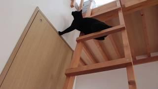 梯子をのぼるのはスイスイなんだけど 降りるのは少々苦労しているようです.