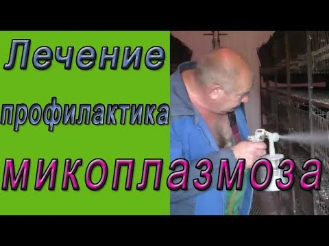Микоплазмоз у кур.  Лечение и профилактика микоплазмоза
