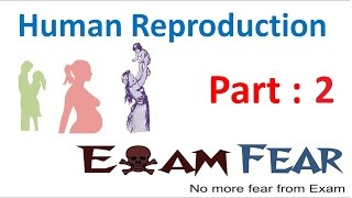 Biology Human Reproduction part 2 (Male Reproductive System) class 12   XII