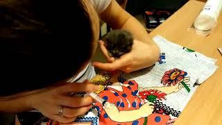 Котенок не ест / Как кормить котенка из шприца
