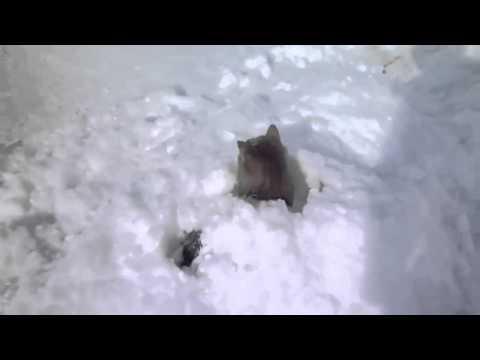 кошку приколы