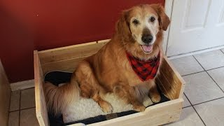 Make A Dog Bed Out Of Pallet Wood