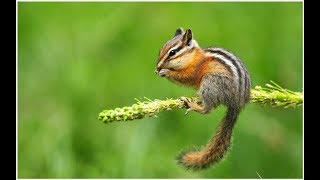 Cute Chipmunk Photo Collection