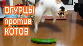 Nice Funny Огурец против кота | приколы