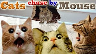 Cats chase by Mouse | Funny compilation