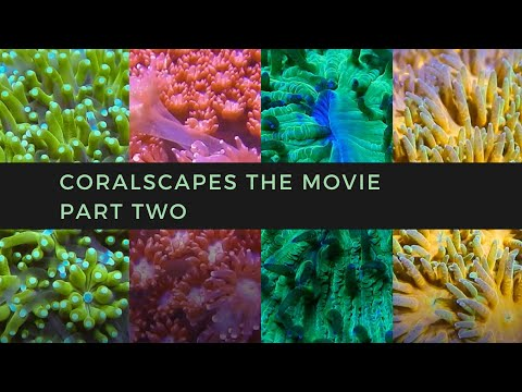 Coralscapes the Movie | Part Two