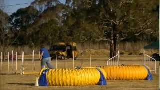 Festival Of Agility Club Challenge 2012 Adc .wmv