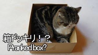 ドッキリな箱とねこ2-pranked-box-and-maru