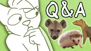 What Animal Am I? Q&A (+Face Reveal)