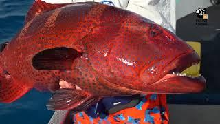 Рыбалка на Сейшельских островах