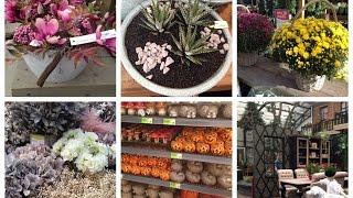 Comprando plantas na Holanda e o decor em casa