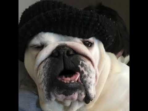 Sponsored blogs bulldog style