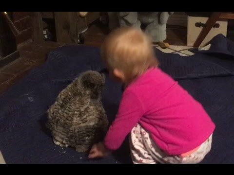 Baby Owl Dancing with Baby Girl