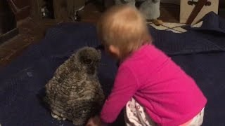 Gambar cover Baby Owl Dancing with Baby Girl
