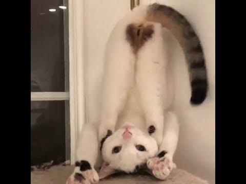 Лучшие приколы с котами кошками и другими животными / funny cats animals video