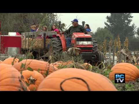 Meet The Farmer: The Modern-day Pumpkin Patch
