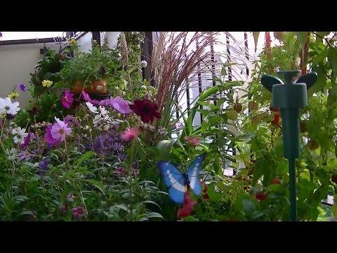 ゆめかわいい♡ソーラー蝶々(82)Solar Butterfly 82  モーツァルト「ロンド・イ短調」K.511