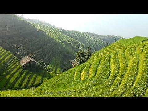 Beautiful Chinese Music - Rice Valley