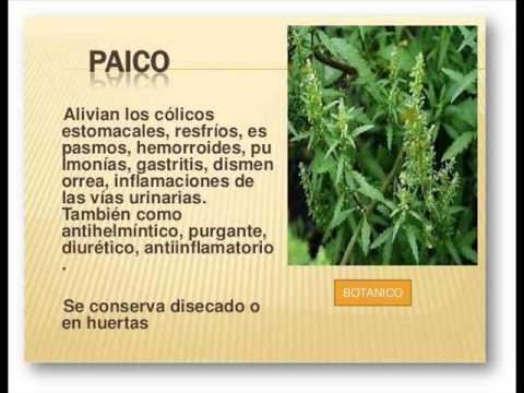 Plantas medicinales del putumayo 39 youtube for Para q sirven las plantas ornamentales